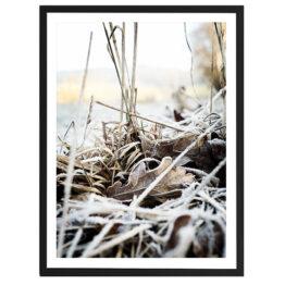 Frozen forest floor 42x52cm