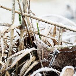 Detail limitiert gerahmt Waldboden Frost