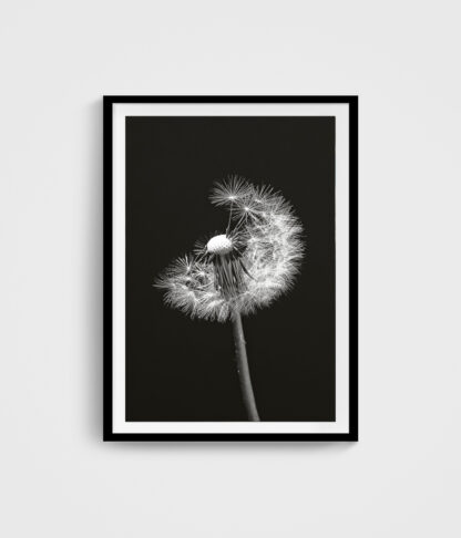 Poster Pusteblume